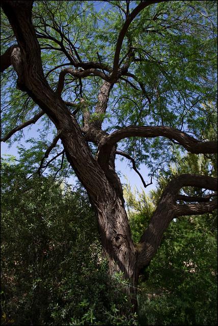 a real tree