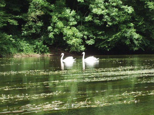 200806110048_kayak-trip-swans