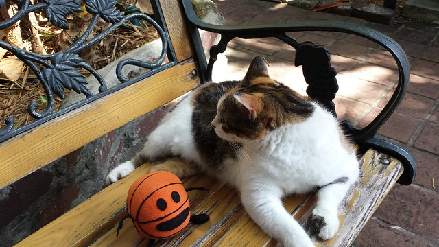 Bally meets Hemingway's cat.
