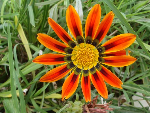 Яркий цветок // Bright flower