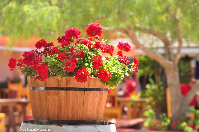 geraniums_web