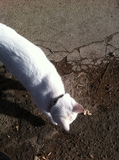Bus Stop: White Cat