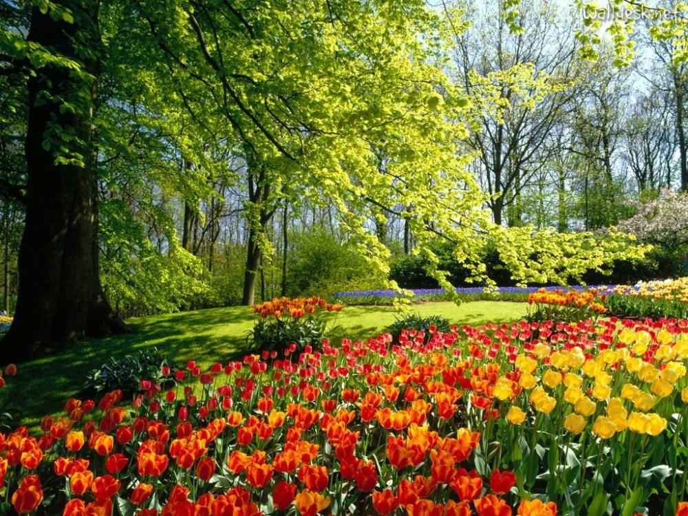 jardim_com_flores_coloridas_29f71c4829662e1cbd55ee8668a16c41_jardim