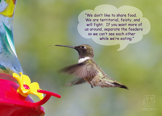 Hummingbird Dialogue 7