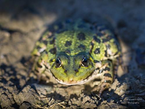 Frosch genießt letzte Sonnenstrahlen