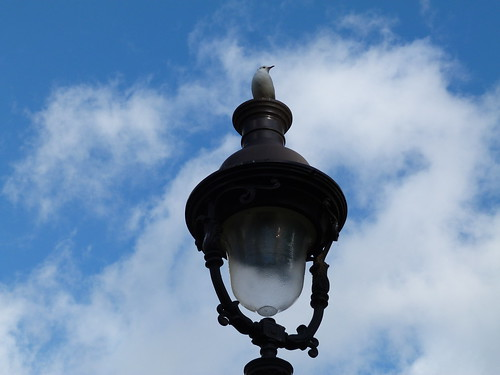 Snarky Gull on a Paris Lampost