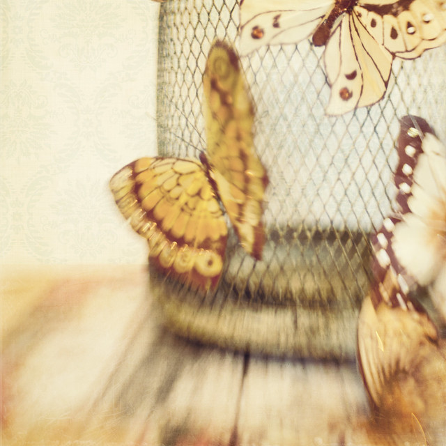 Butterflies Trina Baker Lawrence Kansas Photographer