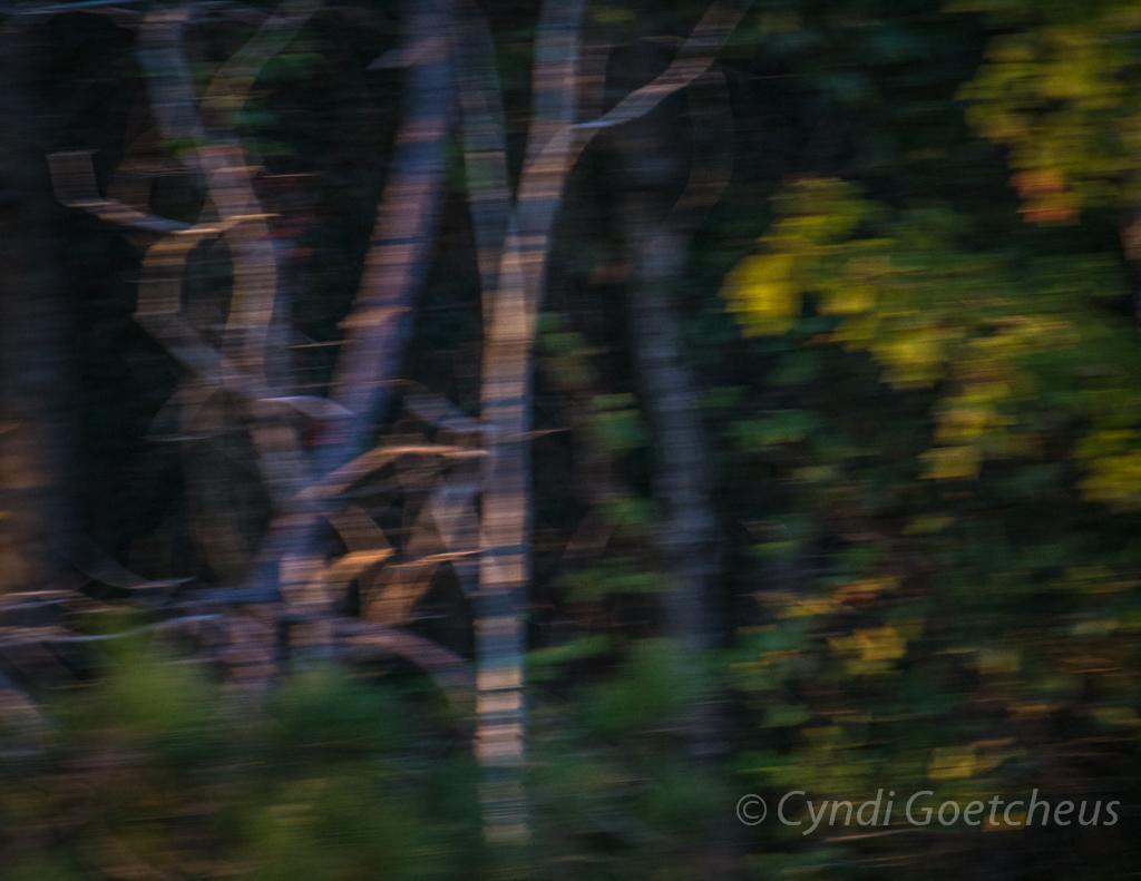 blurred leaves 2