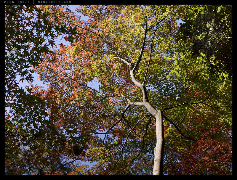 A0000967 copy_autumn portfolio