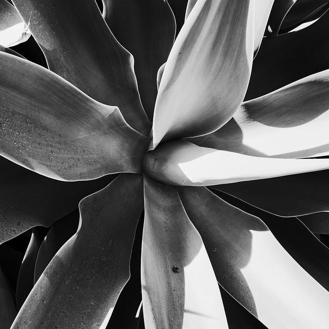 Succulent 3 (JPEG)