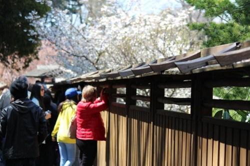 Brooklyn Botanic Garden Sakura Matsuri