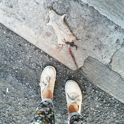 Nooo Stuart Little!