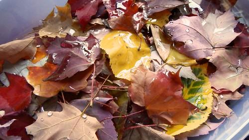 Glycerin Leaves 3