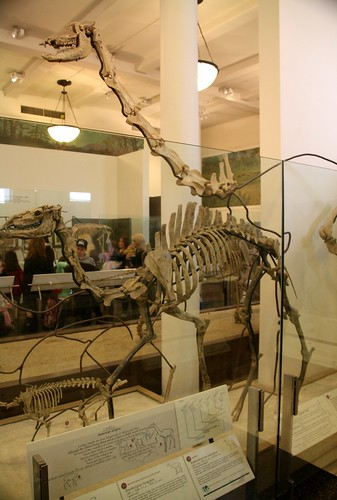 2013: American Museum of Natural History, New York #67