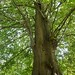 Petworth House : Tree