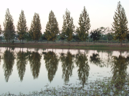 201201100002-trees-reflection