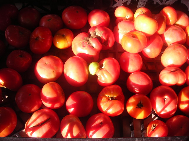 Pink Brandywine heirloom tomatoes