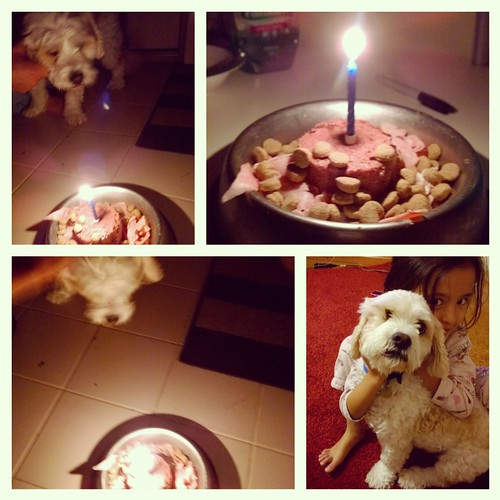 Blue's 8th Birthday