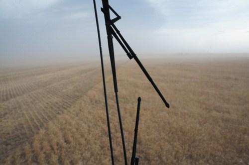 Emma: Texas wheat