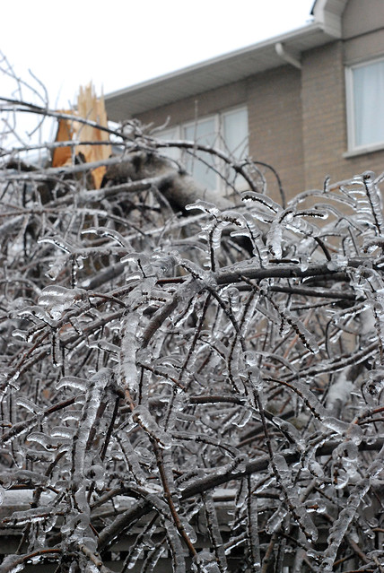 ice storm - fallen tree