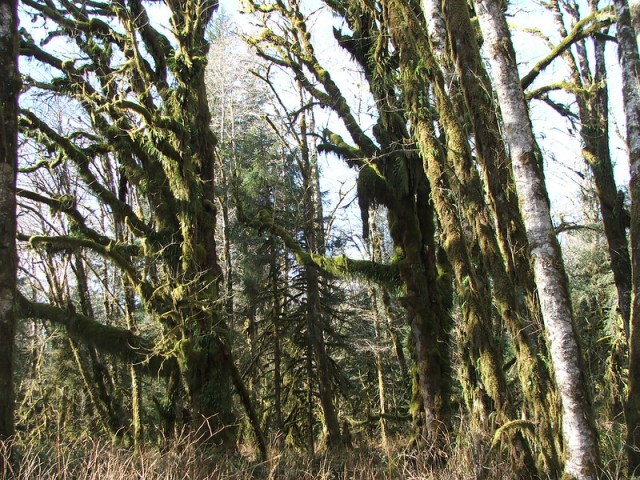 Picture from Olympic National Park