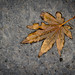 The Last Leaf