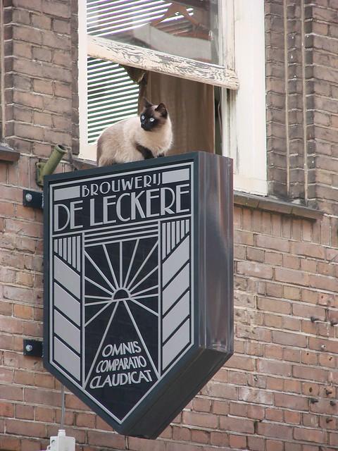 De Leckere Kat