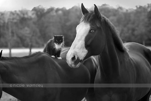 Barn Friends, ©N.Wamsley