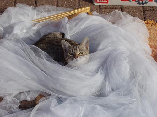 200809210179_Nobressart-cat-in-veil copy