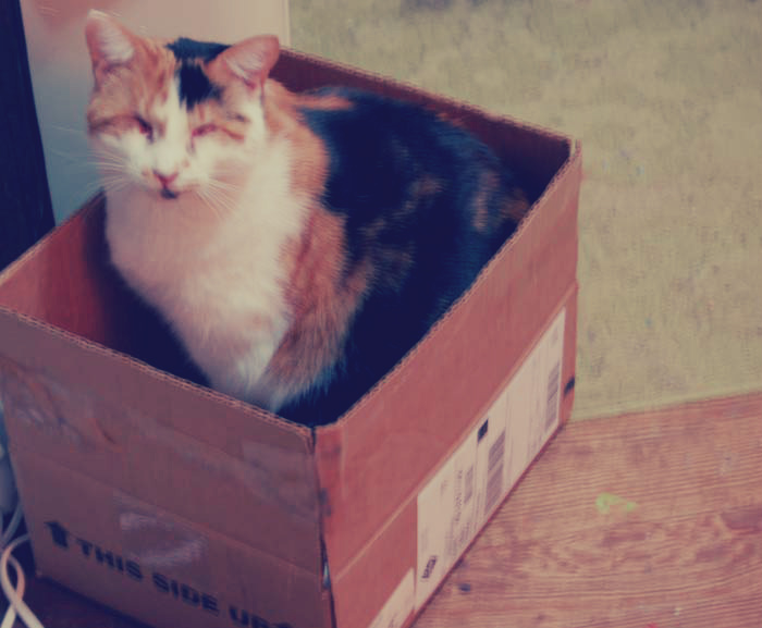 Katherine Jeanne Wood - cat in a box
