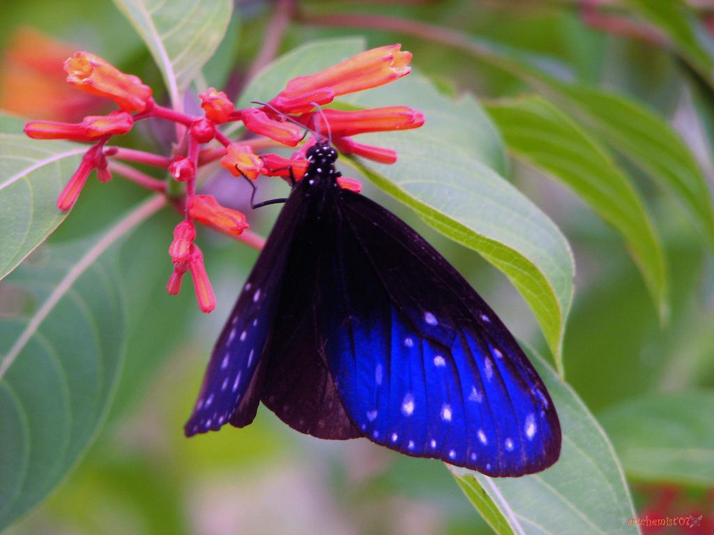 Imagen gratis de una bonita mariposa