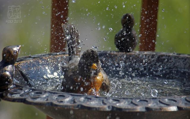 Robins Bath 07