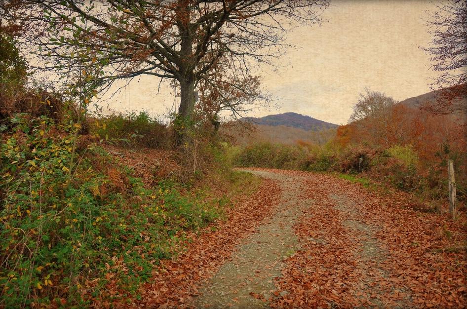 9. Paisaje de otoño en el valle de Baztán. Autor, Canduela