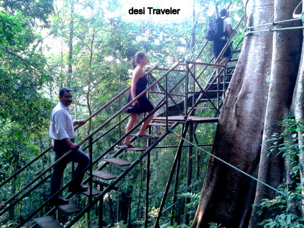 stairs climbing tree house resort hotel rainforest