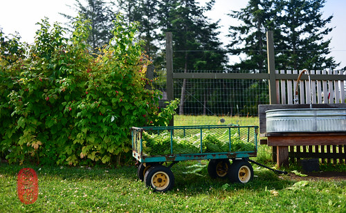 Lettuce wagon.