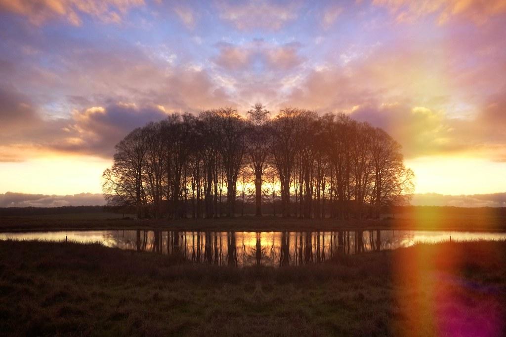 The Pond - Sunlight