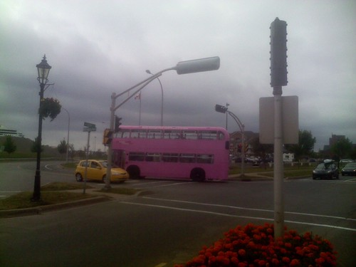 A pink bus in Charlottetown