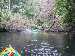 South Edisto River-103