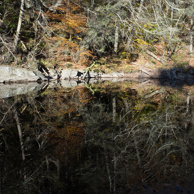 Reflection on the Shepaug River