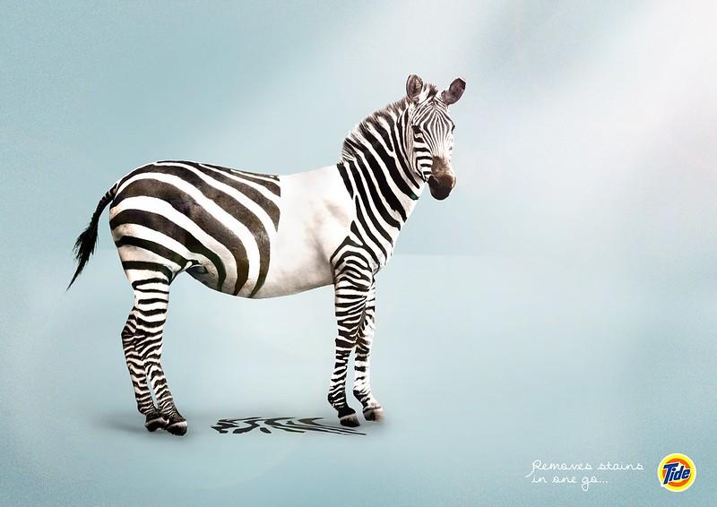 Tide - Zebra