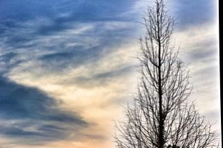 Bare Tree at Sunset