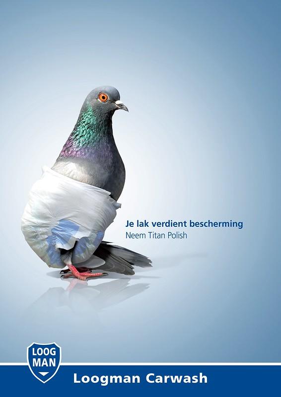 Loog Man- Pigeon