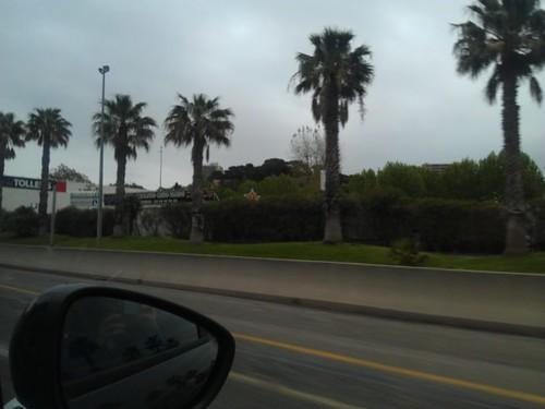 Grijze lucht en palmbomen