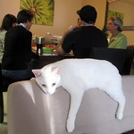 Cat Throw Rug