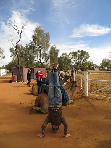64. red centre camels headstand