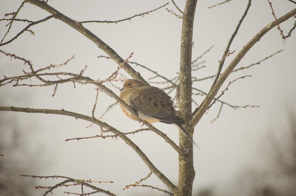 friend to the birds 6