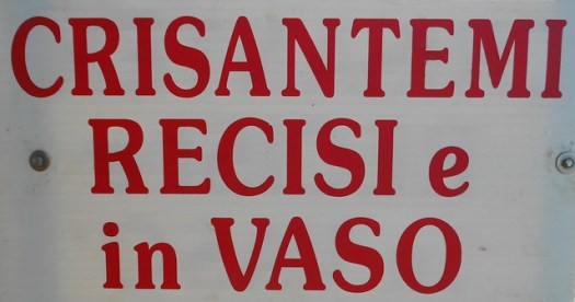 Crisantemi recisi e in vaso, Sarzano, Rovigo