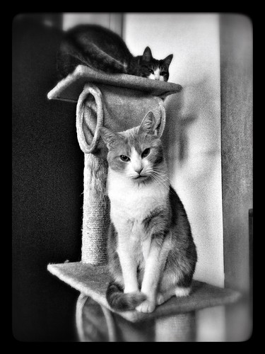 Cats on Throne
