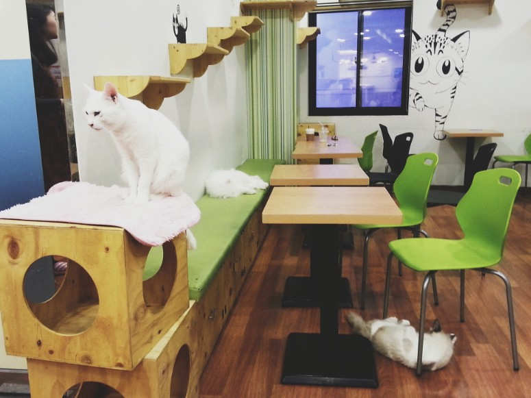 Daegu // Cat Cafe