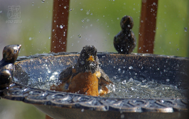 Robins Bath 14